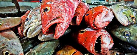 fisk_4602