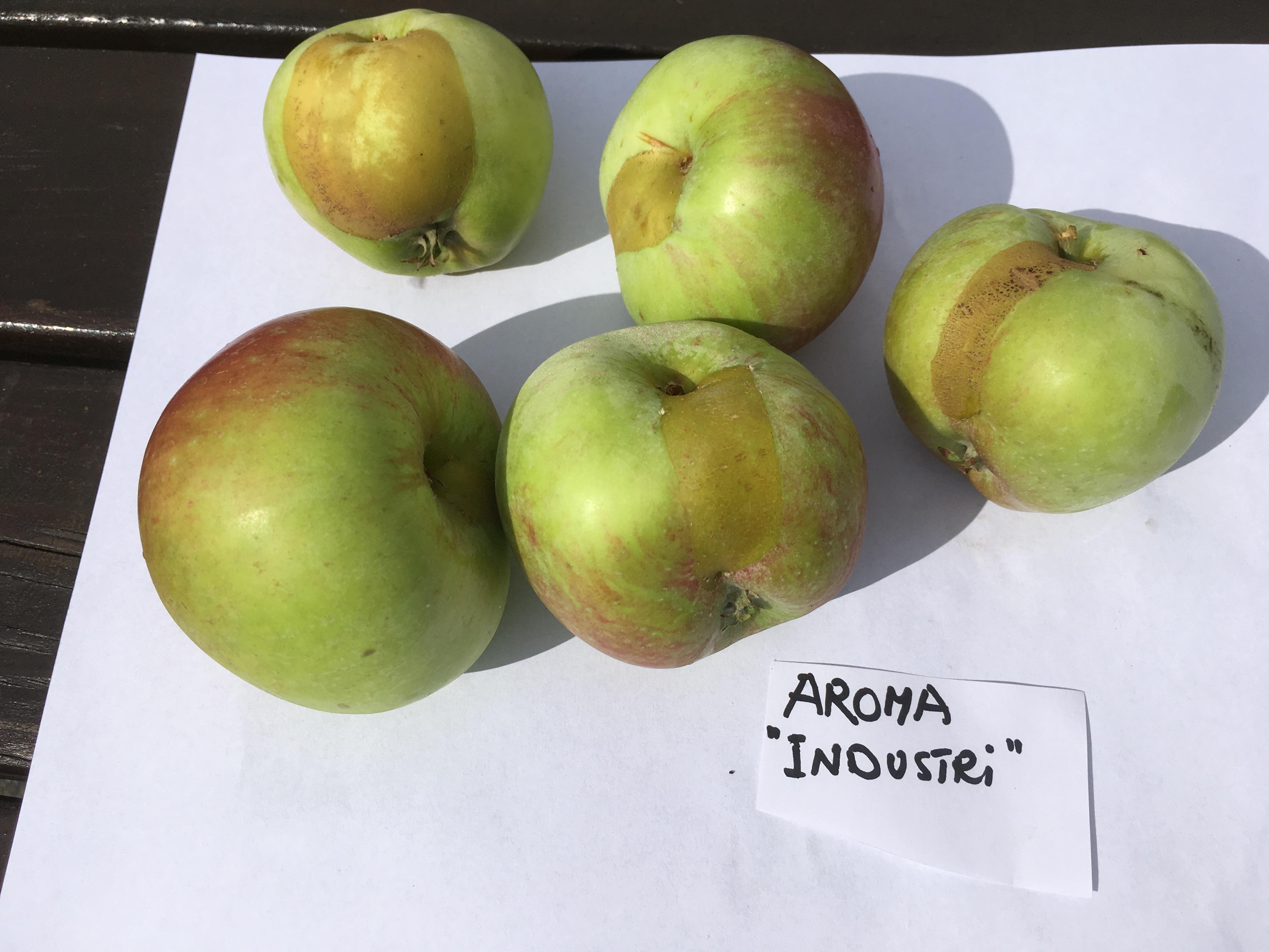 Frostskadat äpple med slips